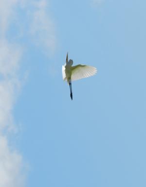 天使の上昇.jpg