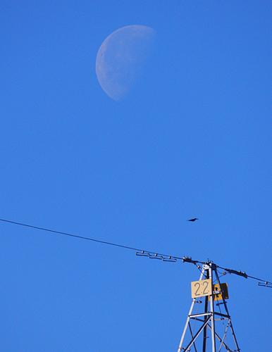 月齢22.jpg
