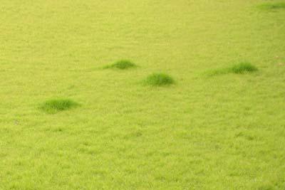 緑の海.jpg