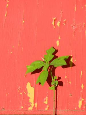 赤緑 補色001.jpg