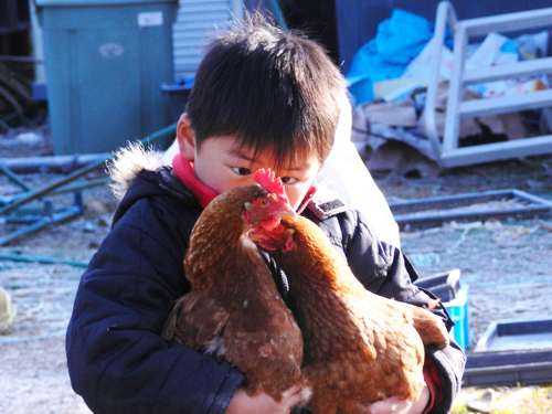 鶏少年02.jpg