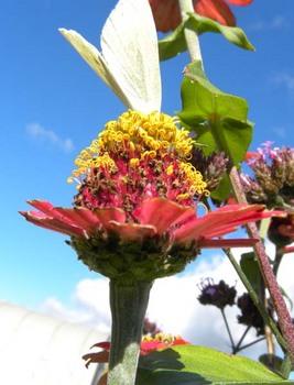 仰ぎ見た蝶と花.jpg